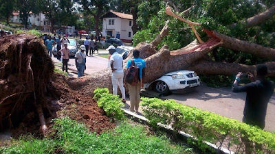 Photos: Driver escapes death after giant tree fell on his car