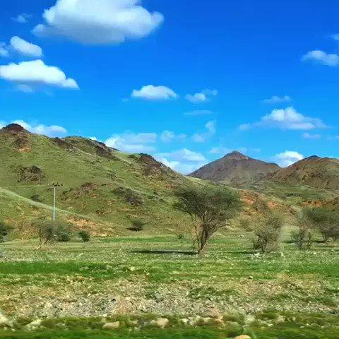 FOTOS: el desierto se convierte en verde en arabia saudita.