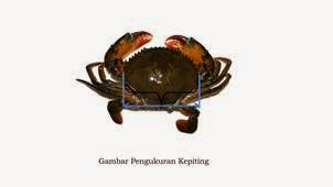 Pengukuran Lobster