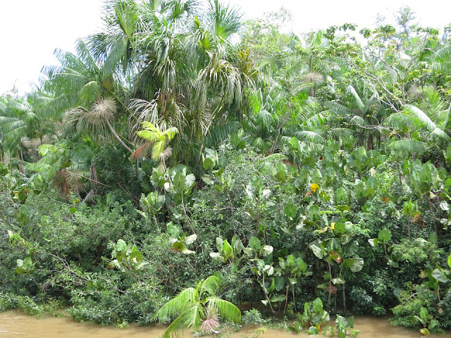 awesome facts about the amazon rainforest