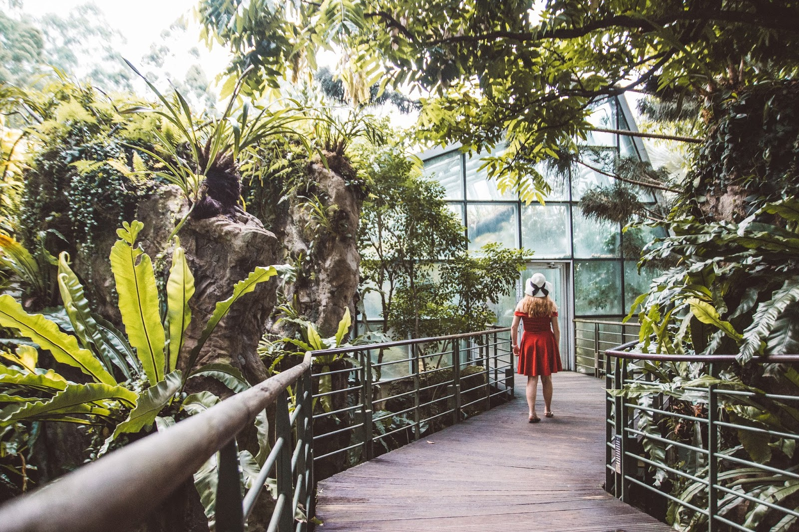 Why You Must Visit The Orchid Garden in Singapore