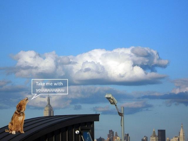 A cloud shaped like a dog