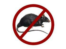 All You Need To Know About Lassa Fever