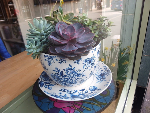Giant tea cup and saucer planter stuffed with large succulents