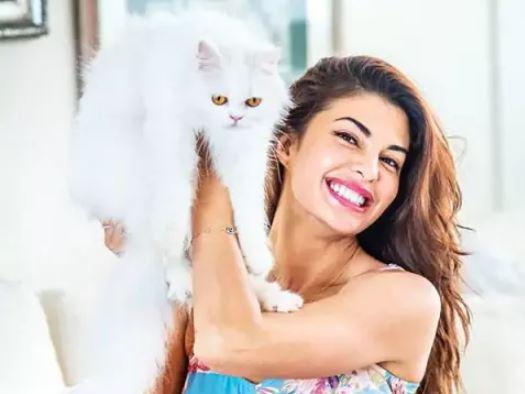 bollywood actress pet