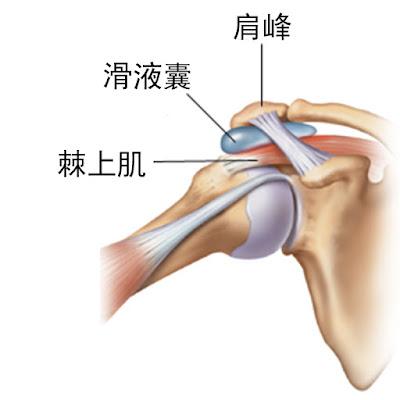 肩膀 滑液囊