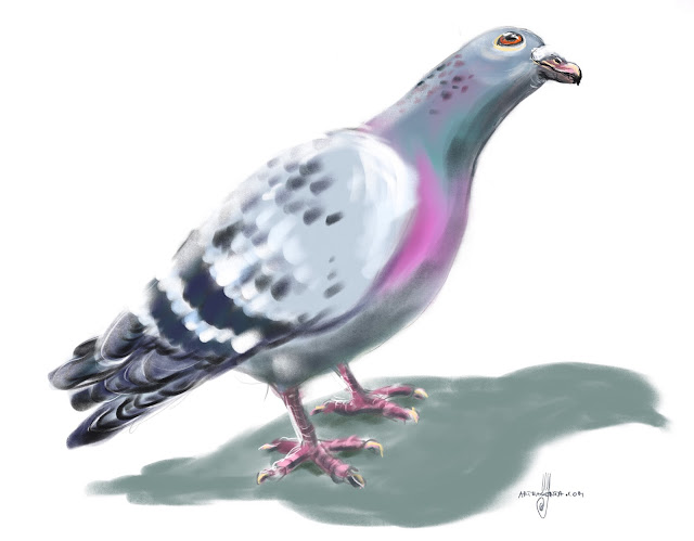Rock dove bird painting by Artmagenta