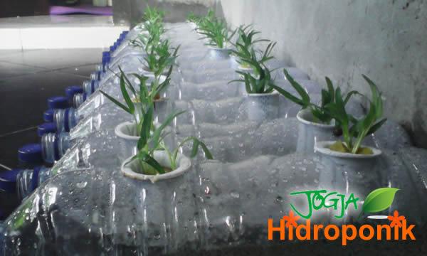 Kreasi Aqua Botol Bekas Untuk Tanaman Hidroponik Jogja