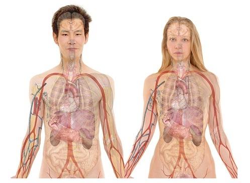 Inilah Penyebab Tanda Gejala - Gejala Penyakit Liver