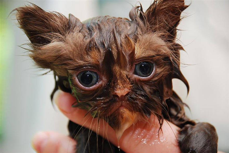 funny-wet-cats-12