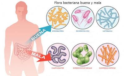 Función de los probióticos