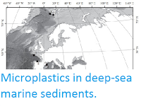 http://sciencythoughts.blogspot.co.uk/2015/10/microplastics-in-deep-sea-marine.html