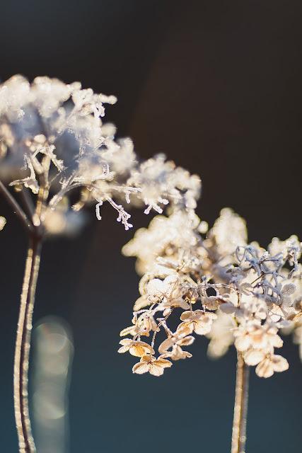 Garten im Winter, Winterzauber, Pomponetti