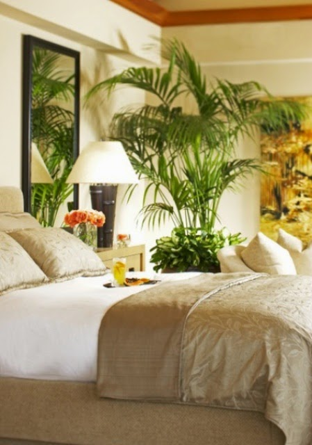 Indoor Gardening!: Plants For Bedroom