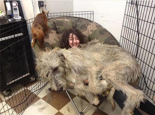 """Chú chó """"thiên hạ đệ nhất khủng"""""""