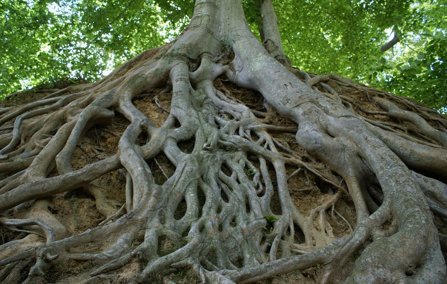 Come uccidere le radici degli alberi – Suggerimenti per ...