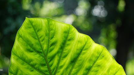 Greenish Beauty from Nature iPad