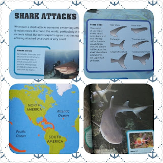 shark factivity sample collage