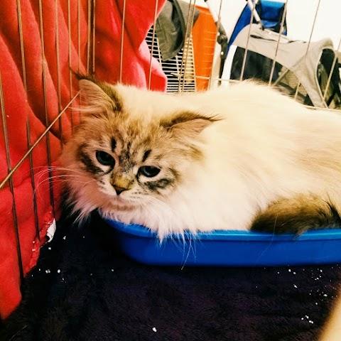 International Cat Exhibition