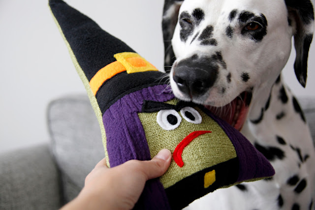 Dalmatian dog biting a homemade Halloween squeaky toy shaped like a witch