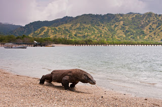 Open Trip 4H3M Komodo Tour (Live on Board)