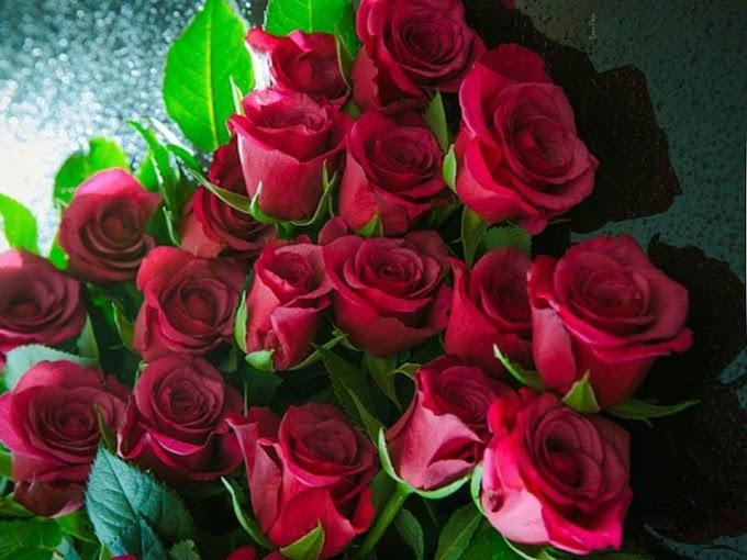 गुलाब है ज़िन्दगी