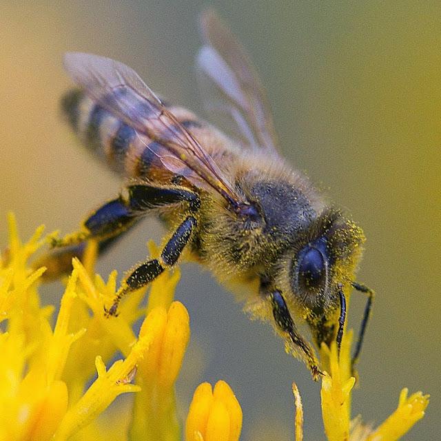 Πωλούνται μελίσσια- παραφυάδες - μέλι- μελισσοκομικά προϊόντα- στην Θεσσαλονίκη