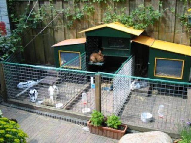 gambar kandang kelinci anggora