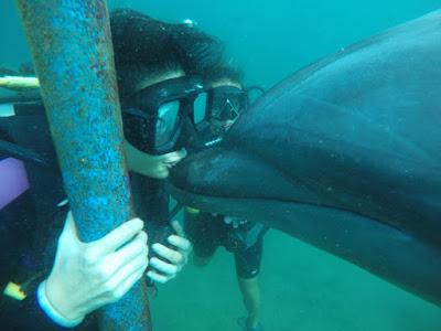 subic bay ocean adventure kiss dolphins
