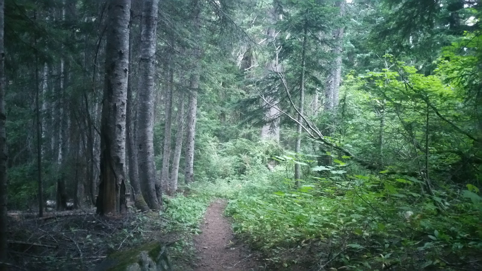Beautiful Washington Forest from Karma PCT.