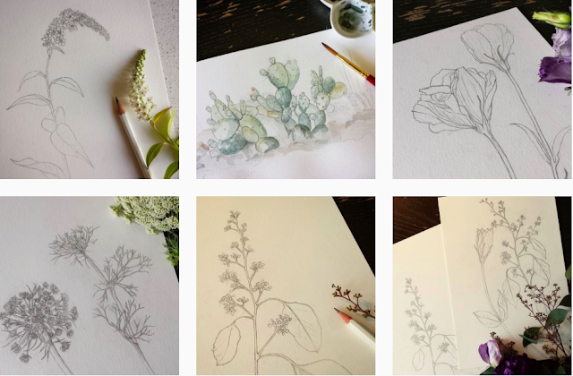 #BotanicalHundred #The100DayProject