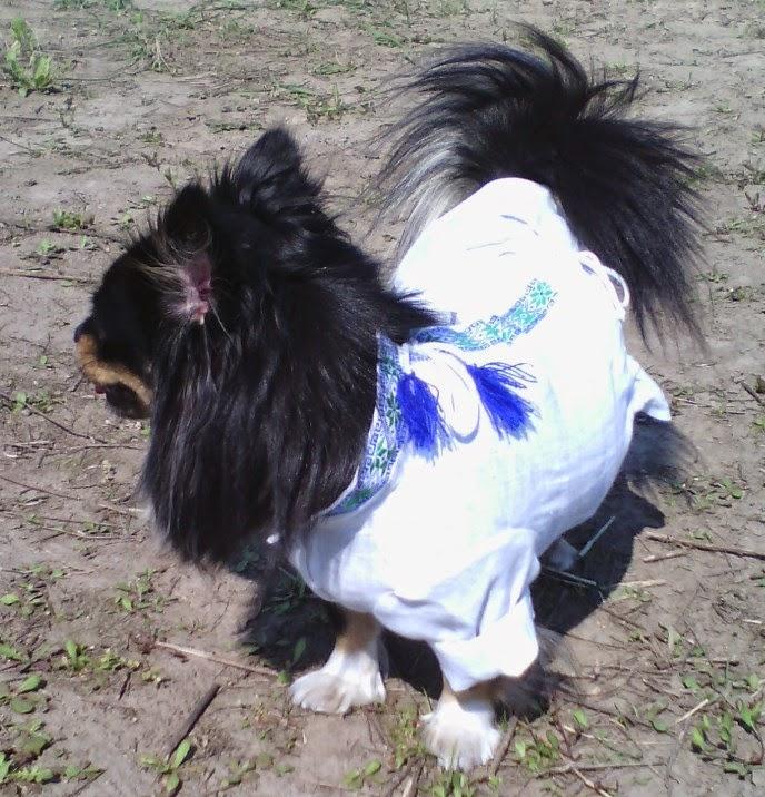 вышиванка на собаке