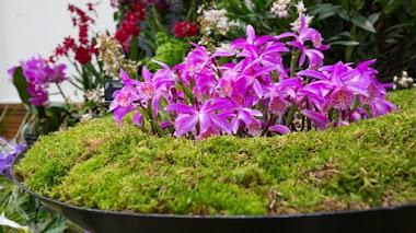 Exhibición de orquídeas en Londres (RHS Orchid Show & Plant Fair)