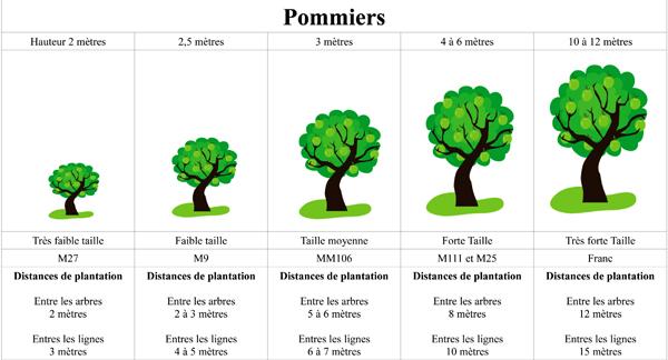 Les secrets de la taille et de la greffe des arbres fruitiers bio les portes greffes du pommier - Arbre petite taille ...