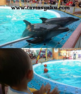pentas lumba-lumba