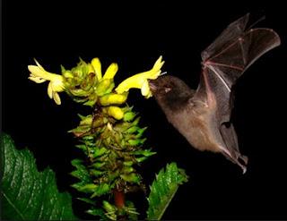 Come chiamare attirare insetti impollinatori sulle piante