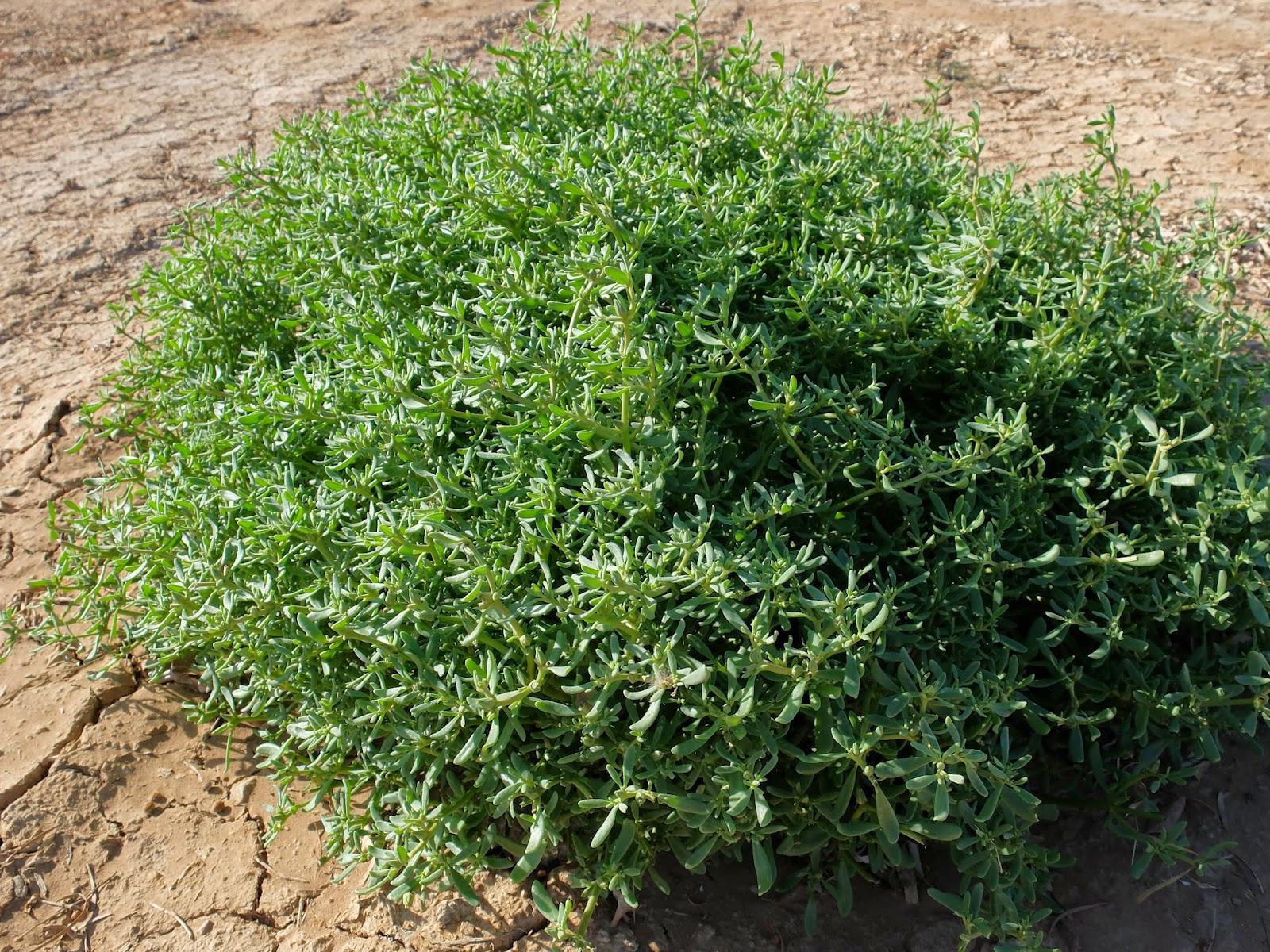 Travelmarx Imperial Valley Jaunt Plants