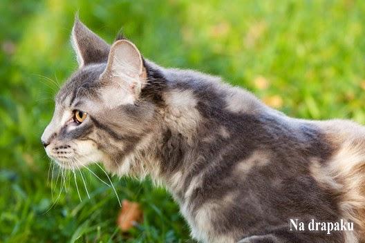 Czy koty są mądre?