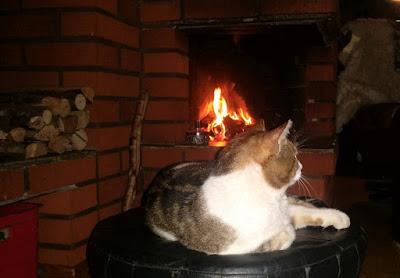 Reiska, Tatun kuva, kissa