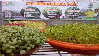 Pertanian Organik adalah hidup kita - Pangan Sehat