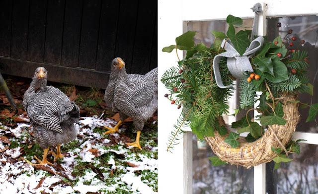 Julekrans og hanekyllinger