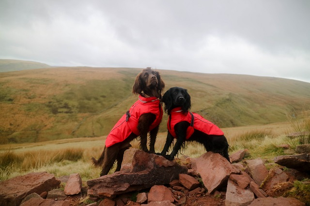 5 Fun Adventures to Have with your Dog