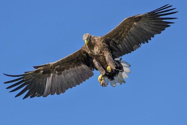 De adelaar de totem, of gids in jouw leven een inwijding!