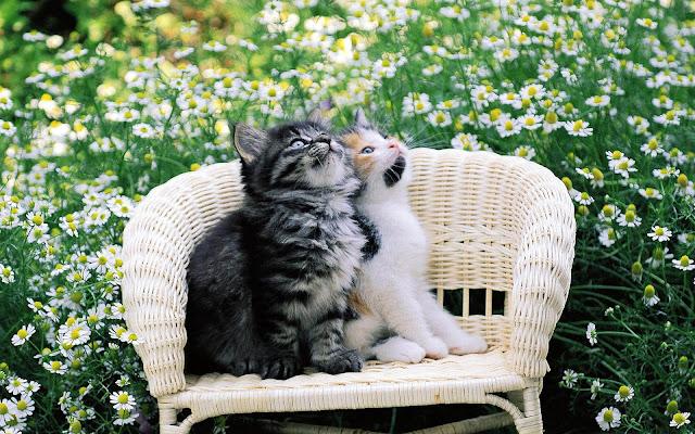 Twee katten op een stoel