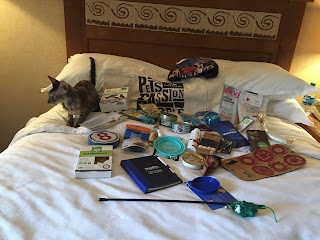 Coco, the Cornish Rex, checking out the BlogPaws Swag
