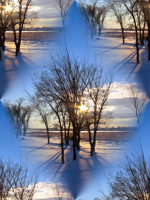 winter+trees - Reasons to Love Winter