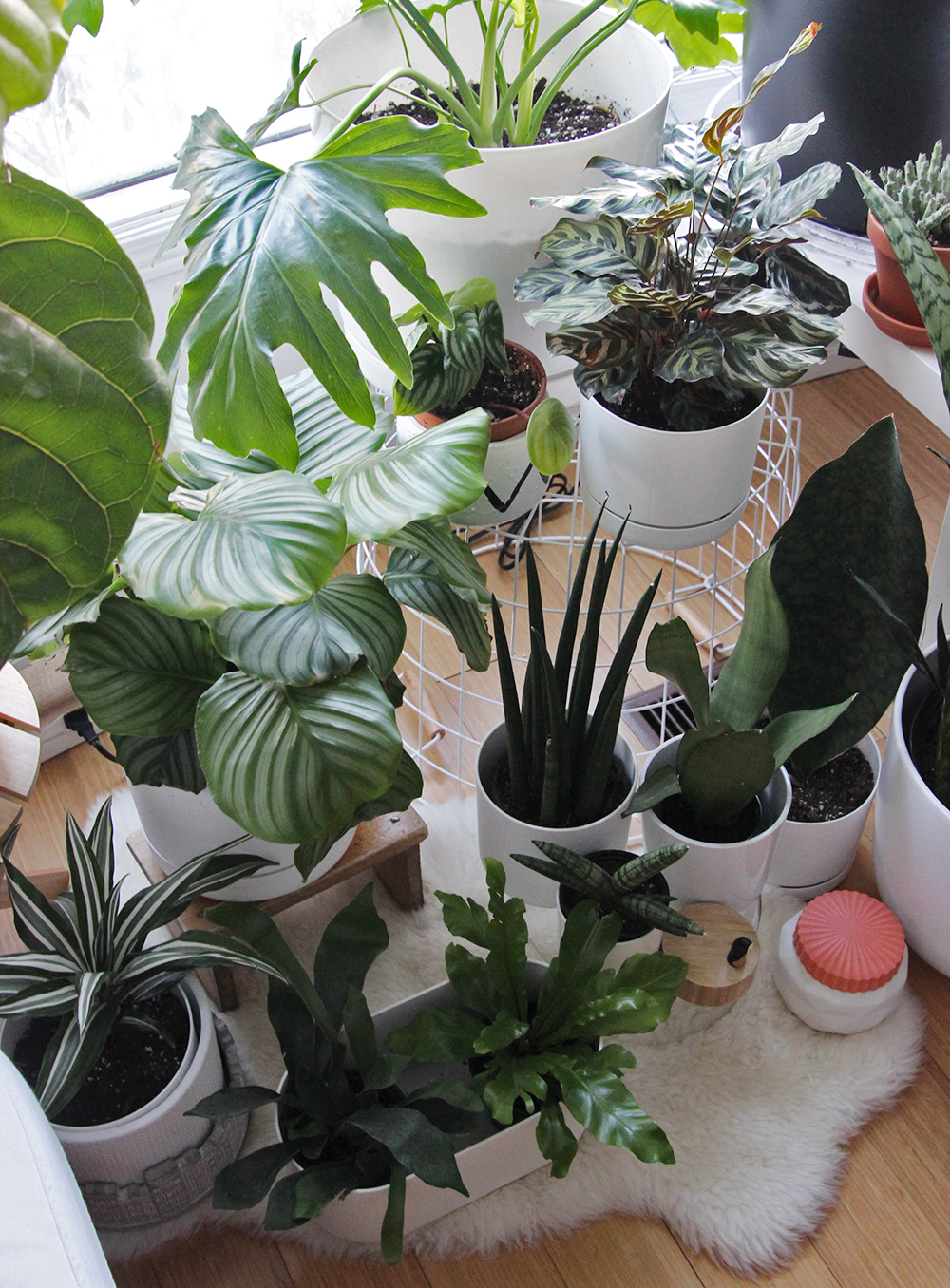image of various indoor house plants
