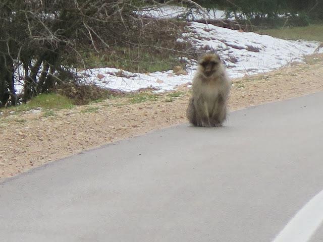Monos hacia Oum Er-Rbia