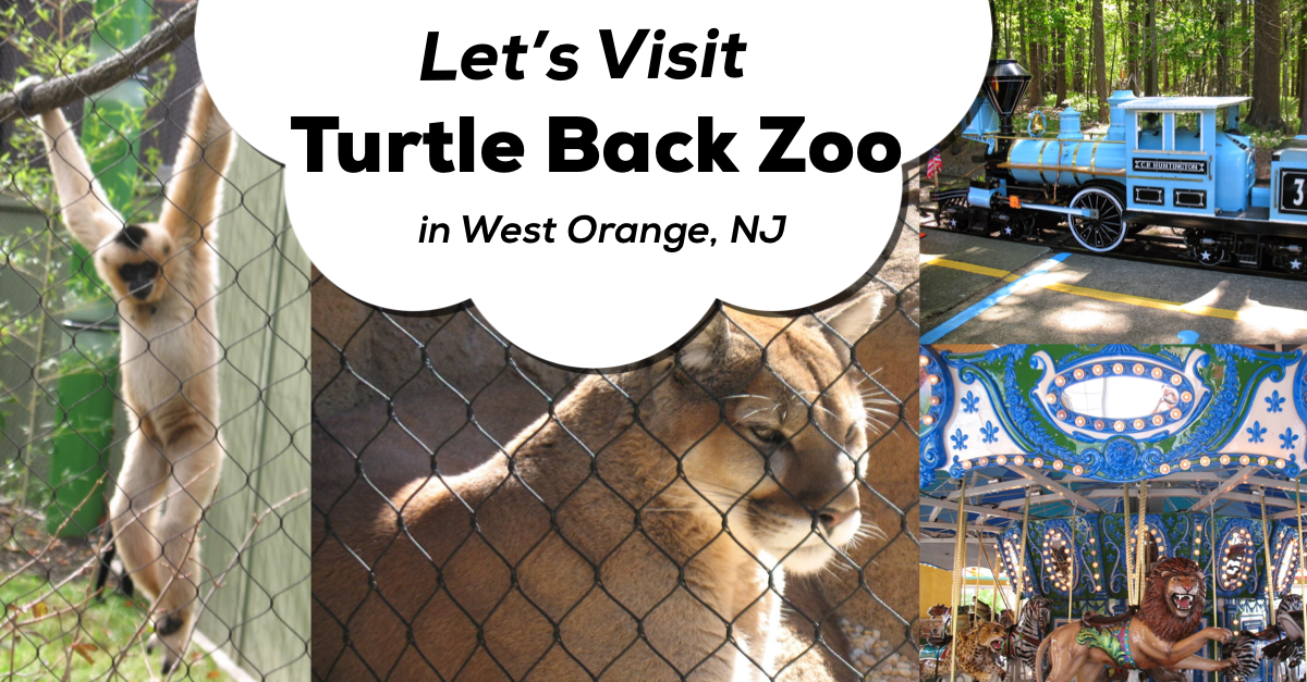Turtle Back Zoo Christmas Lights 2019.A Review Of The Turtle Back Zoo Classic New Jersey Day