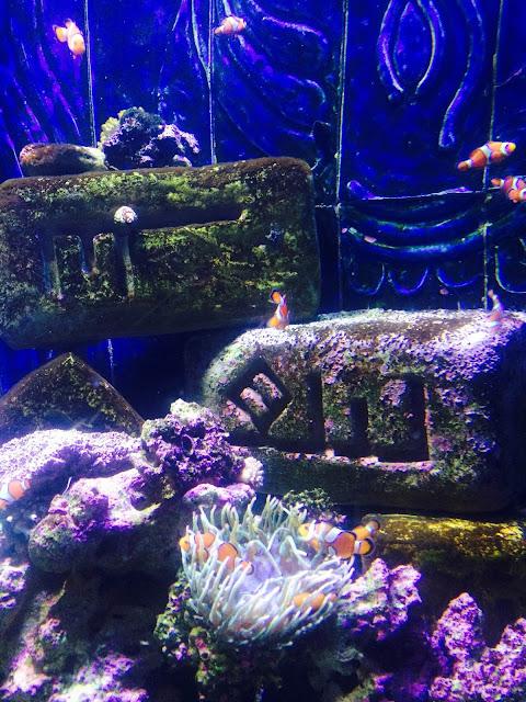 The Lost Chambers Aquarium Atlantis Dubai